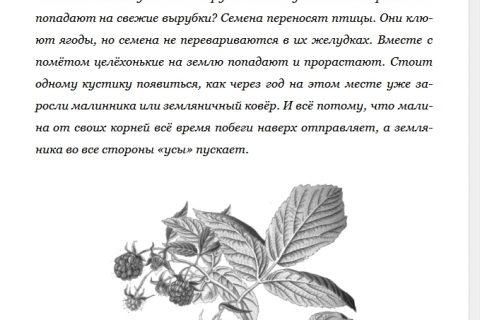 Лесные шорохи. С вопросами и ответами для почемучек (рис. 1)