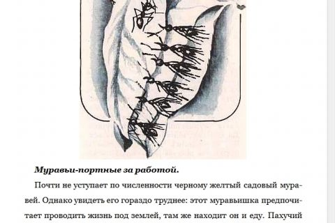 Ю.Д. Дмитриев. Соседи по планете. Насекомые (страница 4)