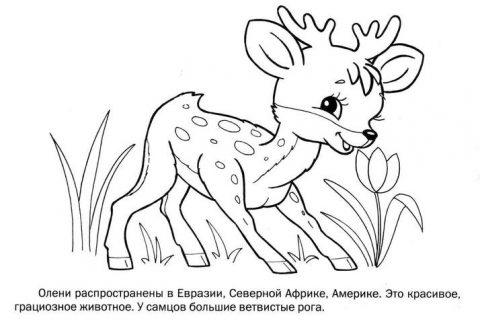 Дикие животные - раскраска для малышей_4