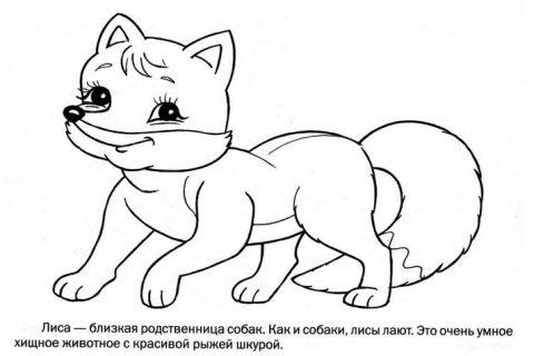 Дикие животные - раскраска для малышей_7