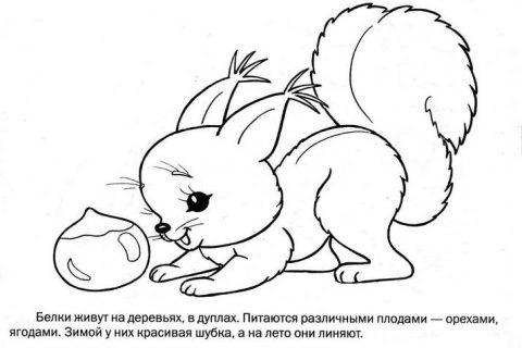 Дикие животные - раскраска для малышей_8