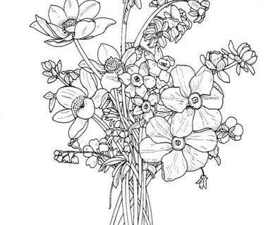Цветы - сборник раскрасок_9